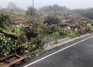 A large quantity of branches, wood and garden cuttings tipped near Plymouth